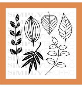 planche feuilles automnales et ses dies coordonnés