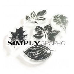 planche empreintes de feuilles